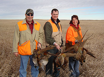 Pheasants sharptail grouse hungarian grouse in north dakota pheasant hunters publicscrutiny Gallery
